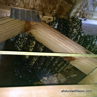 Honey bees rescued in this apartments open web floor trusses