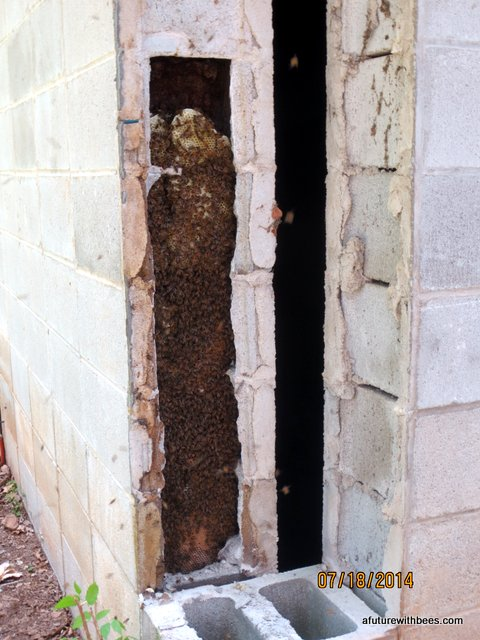 Honey bees in concrete block wall